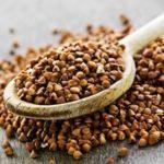 Les graines de sarrasin grillées