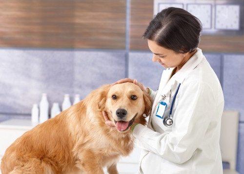 La santé de l'animal de compagnie.